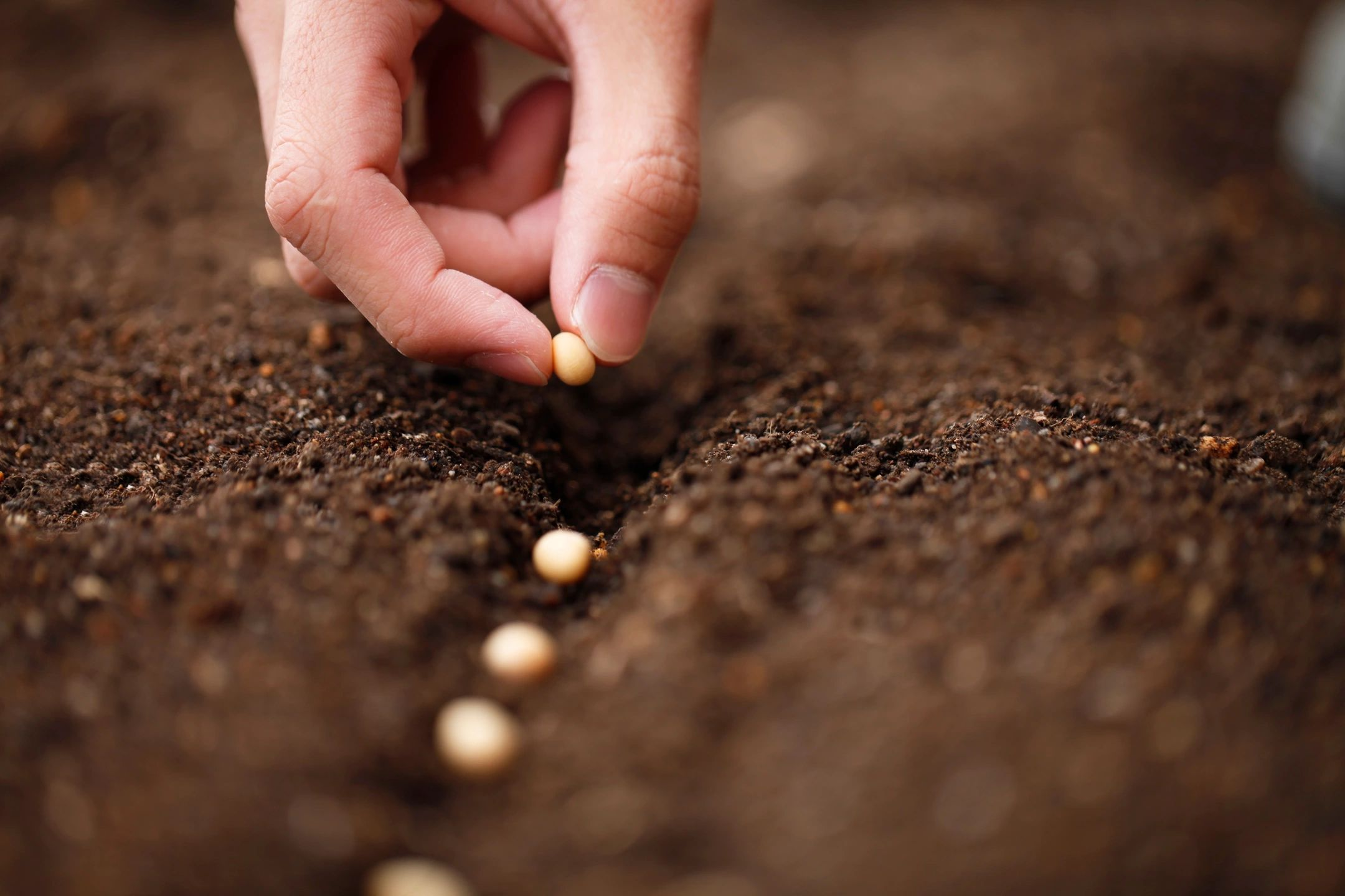 Graphic of seeds being planted in rich soil, representing proper investment and estate planning actions. With decades of experience, the law office of Kinney Mason PC LLO in Omaha, NE can support you with your last will and testament, burial directive, trusts, and other estate planning needs.